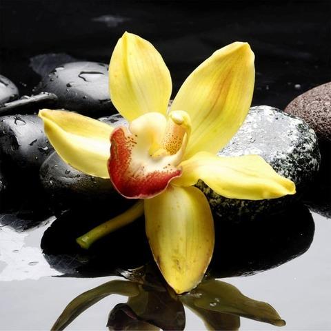 Орхидея желтая 2