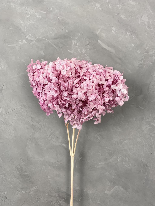 Гортензия на ветке дымчато-розовая