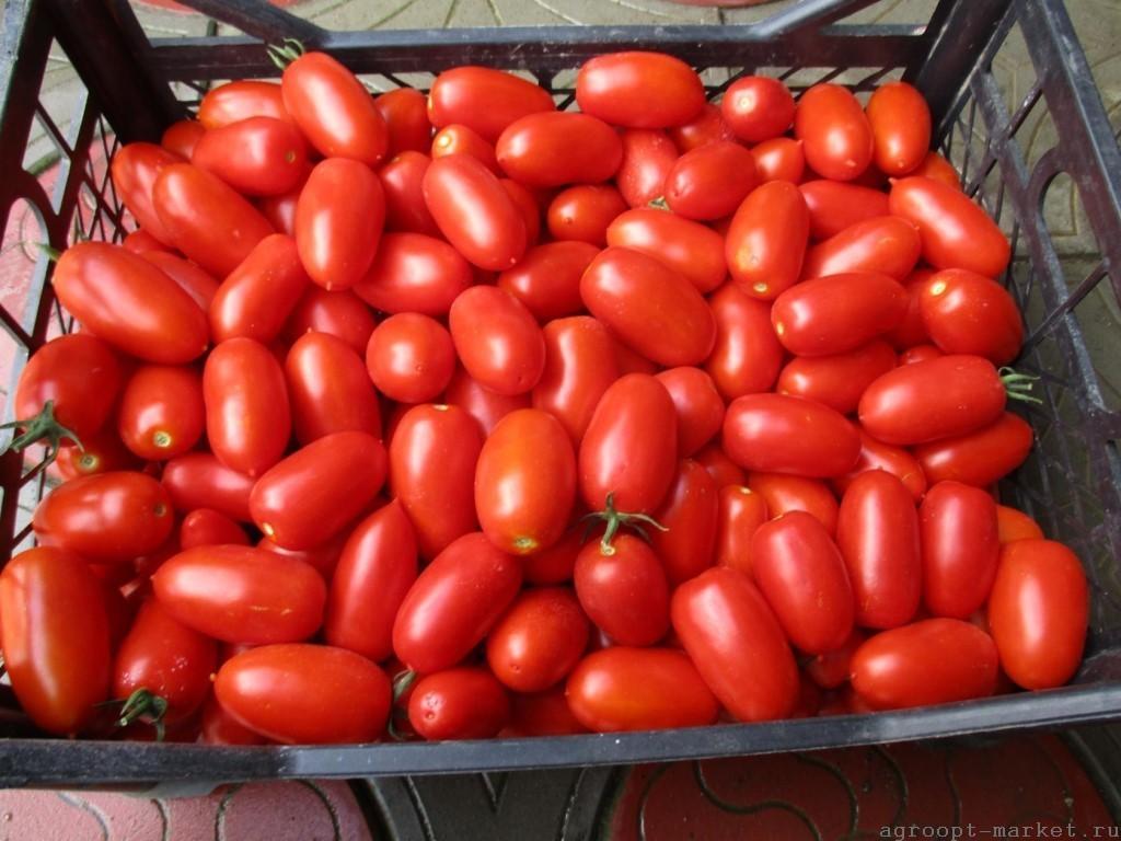 Томат Фрамбо семена томата процессингового (Hazera / Хазера) фрамбо.jpg