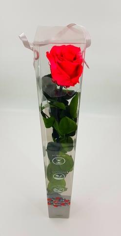 Роза на стебле . Стандарт, Красная.Verdissimo.