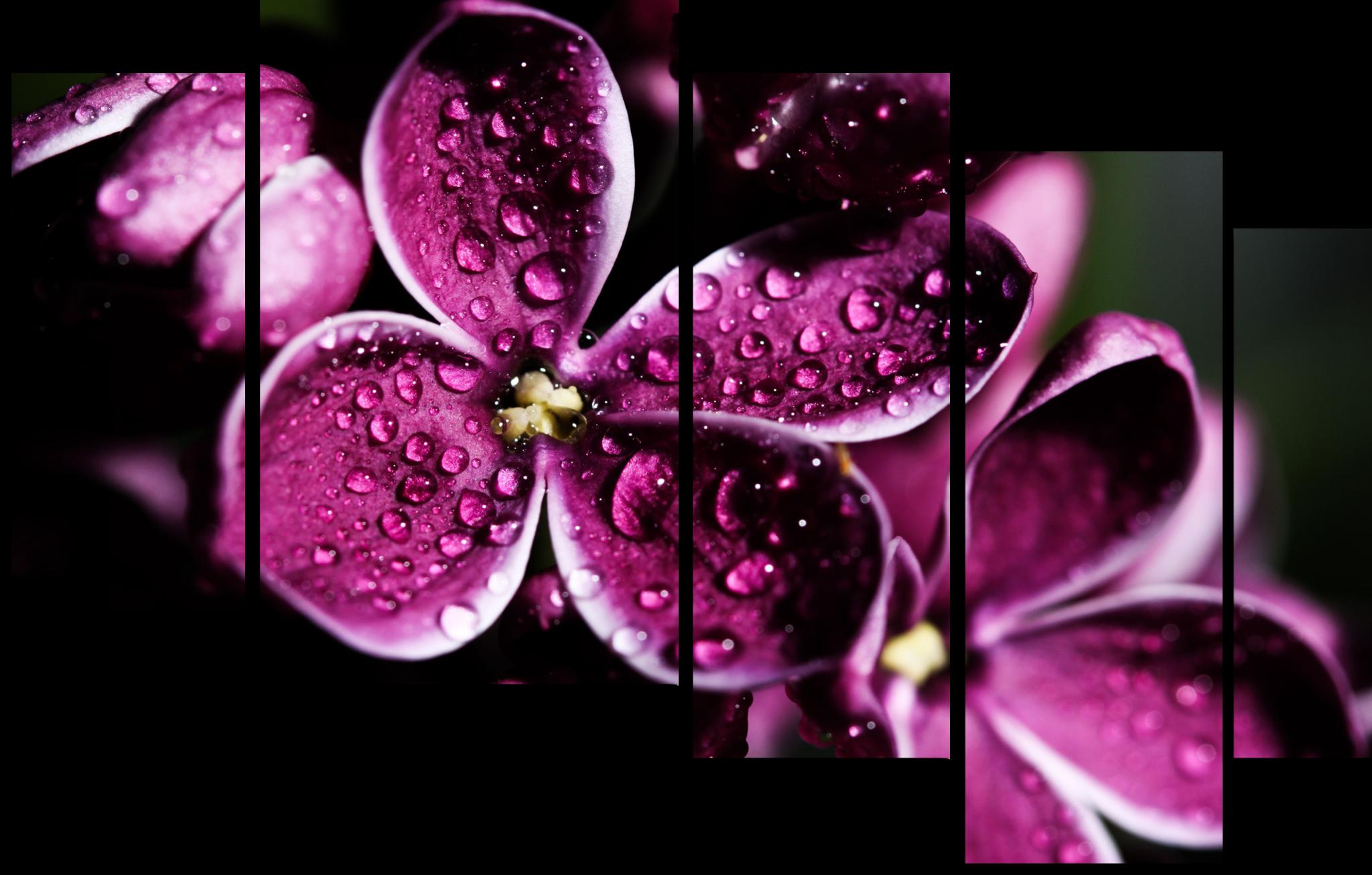 """Цветы Модульная картина """"Капля росы"""" М846.png"""