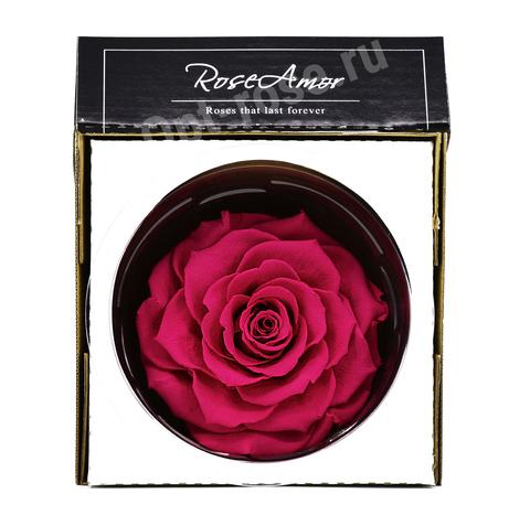 Стабилизированный Бутон Розы Кинг Rose Amor(Эквадор)Bonita Цвет Фуксия (10-12см)