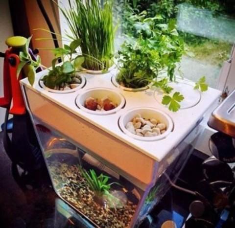 Акваферма - Набор для выращивания растений и ухода за рыбкой