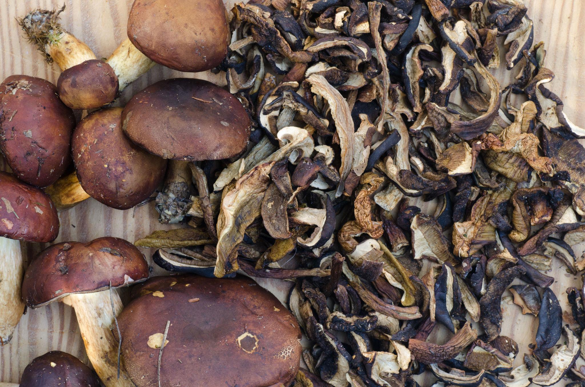 Грибы Подберёзовики сушёные brown-boletus-1.jpg