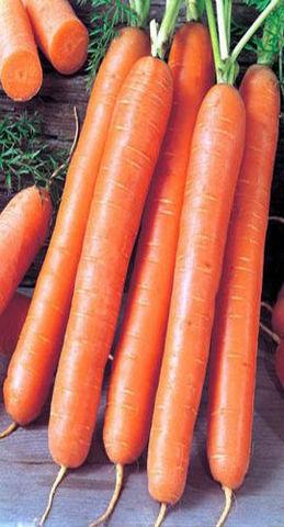 Семена Морковь Форто б/п