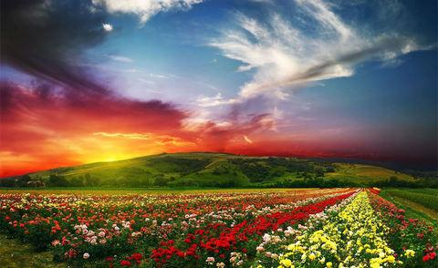 Алмазная Мозаика 30x40 Небо над полем цветов (арт. S3312)