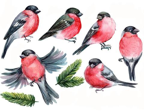 Печать на сахарной бумаге, Набор Птицы 1
