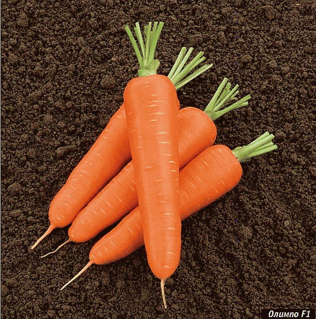 Нантская Олимпо F1 семена моркови нантской (Vilmorin / Вильморин) Олимпо_F1_семена_овощей_оптом_Sakata_Enza_Zaden_Seminis_Rijk_Zwaan_Nunhems_Vilmorin_Clause_Bejo.jpg