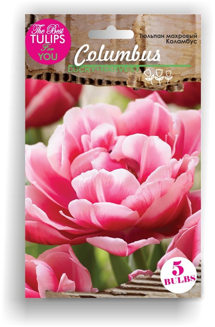 Тюльпан Махровый ранний Columbus (Коламбус) Украина 5 шт