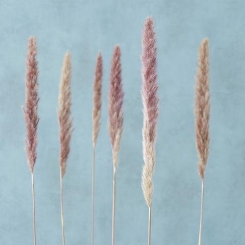 Набор из 6 сухоцветов
