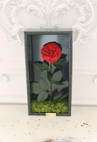 Стабилизированная Роза в Картине Premium Оптом Размер*Бутон (44х22х8см*11см) Цвет красная
