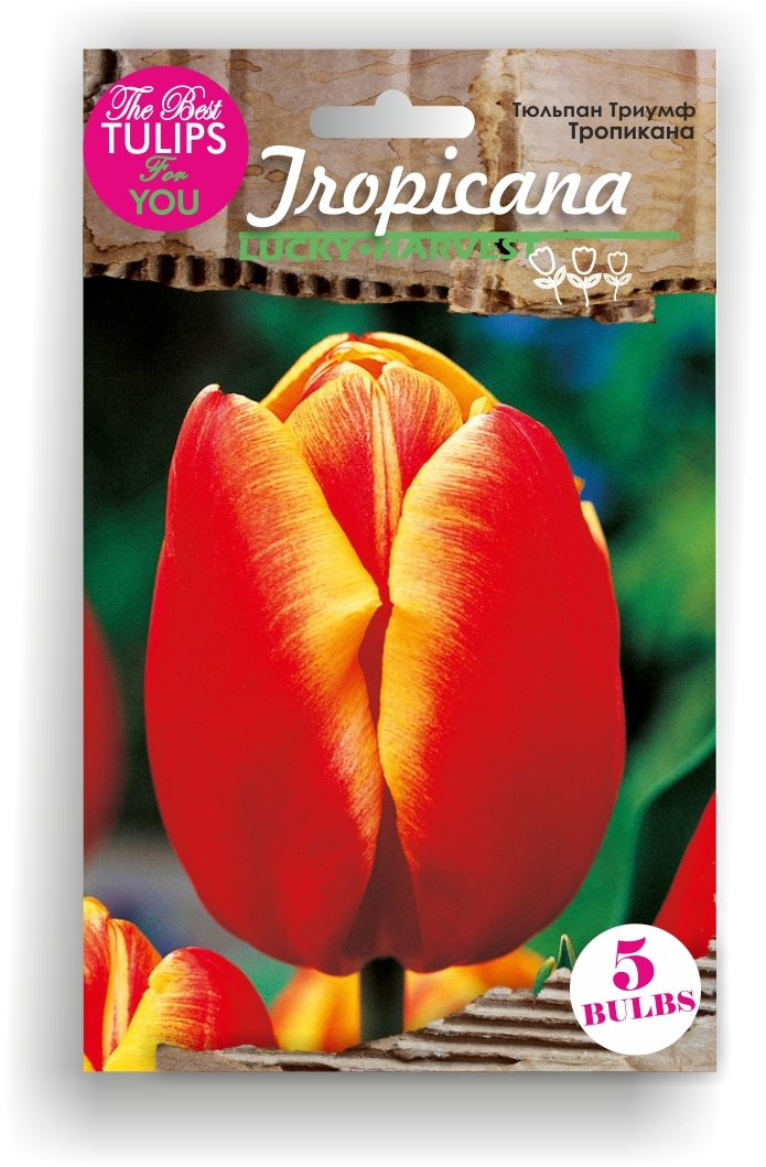 Тюльпан Триумф Tropicana (Тропикана) Украина 5 шт