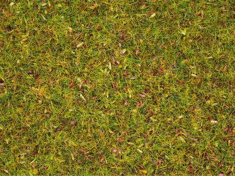 Трава - Луговые цветы, (2,5 мм)