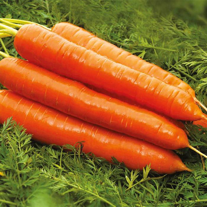 Nunhems Колтан F1 семена моркови берликум (Nunhems / Нюнемс) колтан_морковь_нунемс.jpg