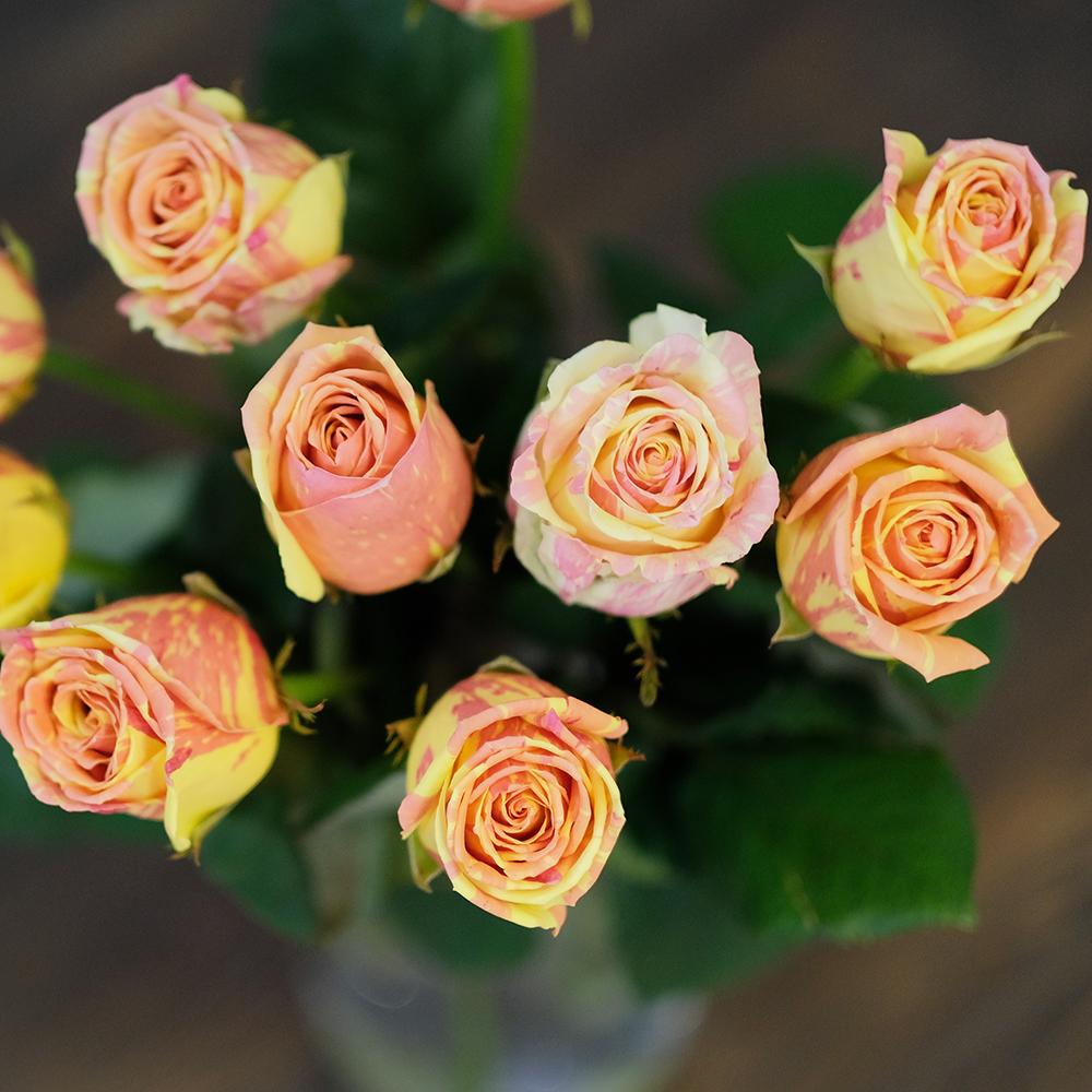 Розы двухцветные Fiesta от 7шт