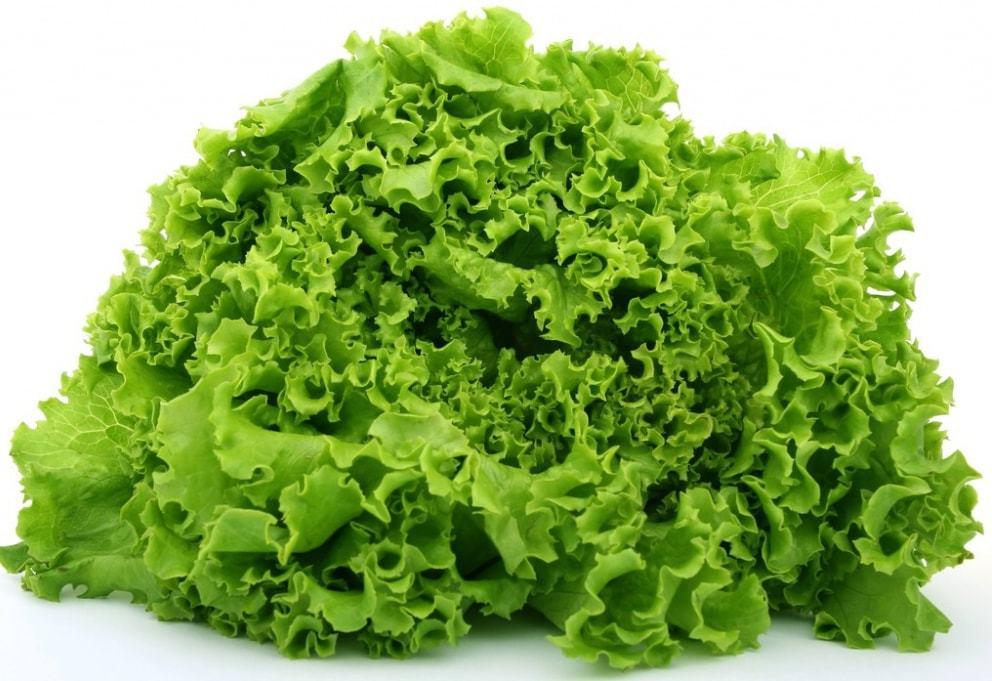 Nunhems Лифли семена салата листового (Nunhems / Нюнемс) Лифли-min.jpg