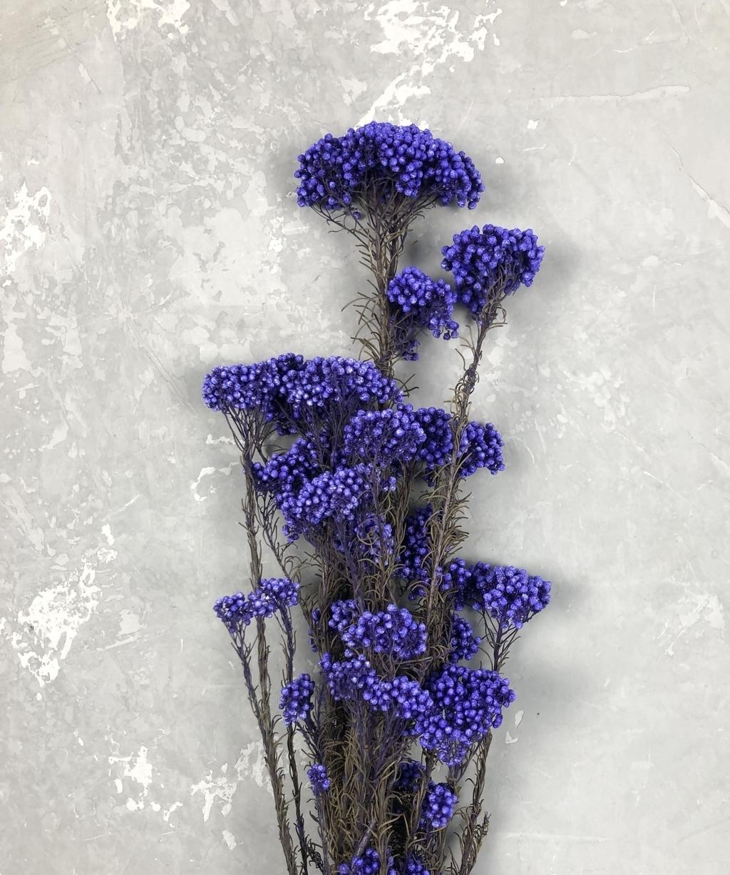 Озотамнус стабилизированный сине-фиолетовый