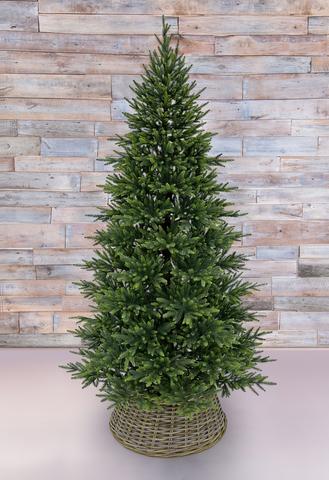 Triumph tree ель Королевская стройная литая