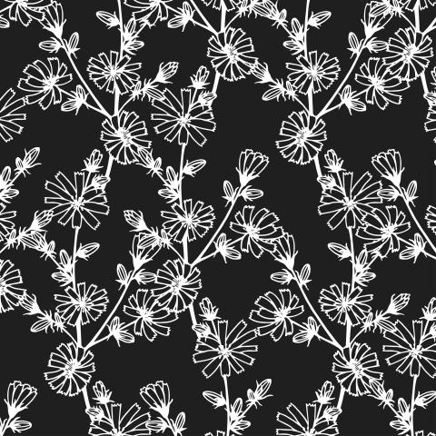 Chicory flowers seamless pattern.