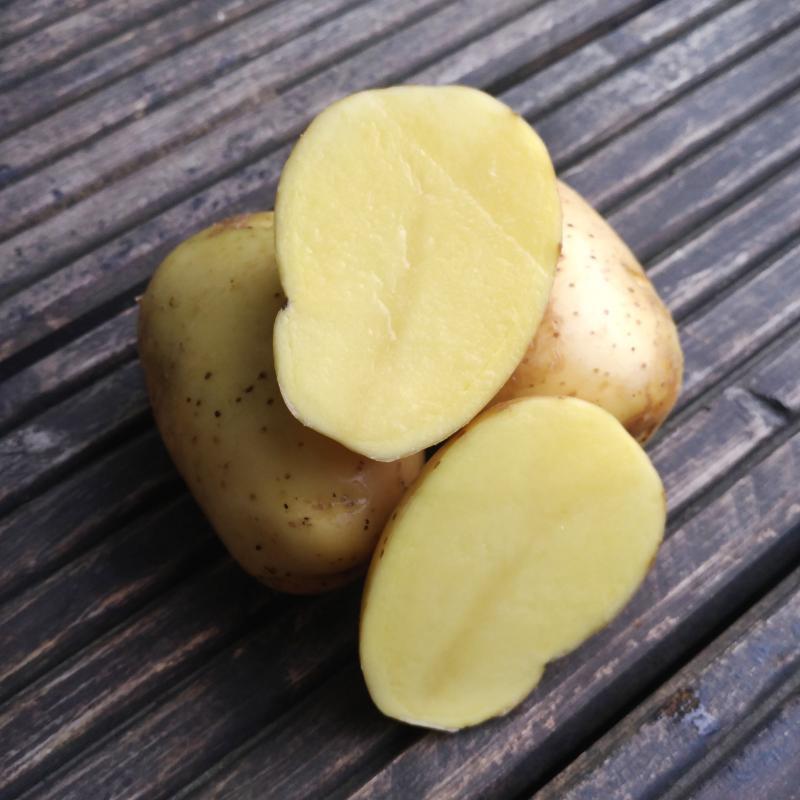 Фотография Картофель семенной сорта «Гала» / 1 кг купить в магазине Афлора