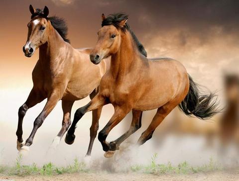 Алмазная Мозаика 5D 40x50 Забег двух лошадей