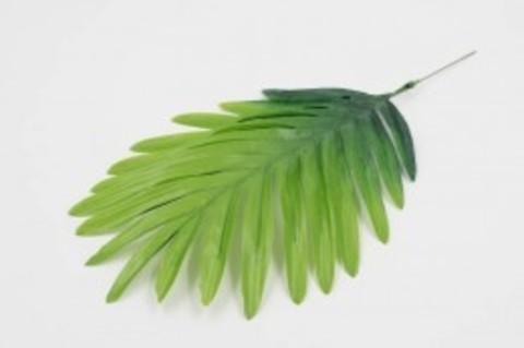 Лист пальмы веер