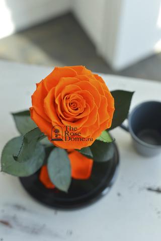 Роза Premium ХИТ Оптом Выс*Диам*Бутон (27*15*11см)Цвет оранжевая