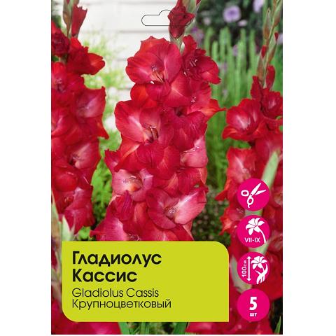 Гладиолус Кассис крупноцветковый 5шт