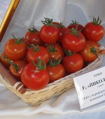 Томат Пиколино F1 семена томата индетерминантного (De Ruiter Seeds / Де Ройтер Сидс) Пиколино_F1__picolino_F1__семена_овощей_оптом.JPG