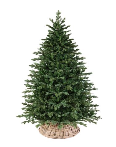 Triumph tree ель Шервуд Премиум 3,05 м зеленая