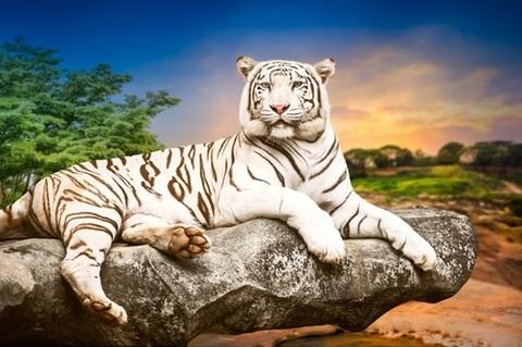 Алмазная Мозаика 40x50 Белый тигр отдыхает на скале (арт. GA73077)