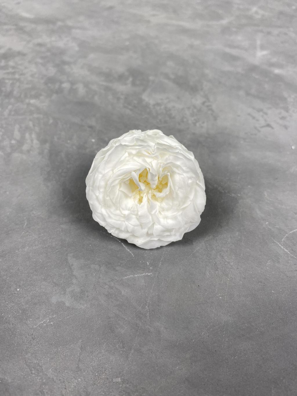 Роза пионовидная с сердцевиной белая 2 d=3-4 см