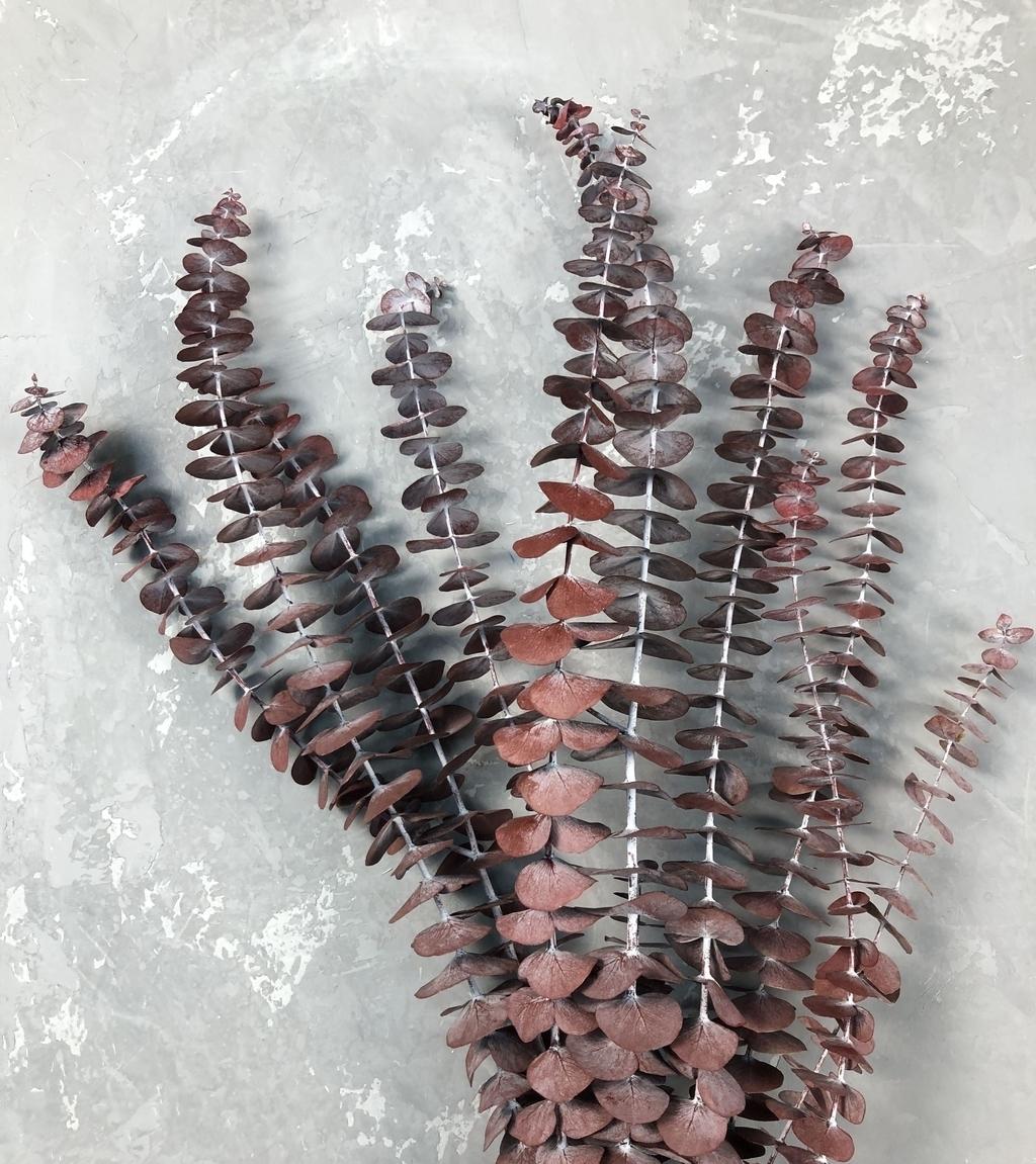 Эвкалипт Бейби Блю стабилизированный коричнево-красный