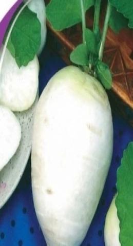 Семена Редька белая