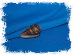 Раковина Conus guinaicus