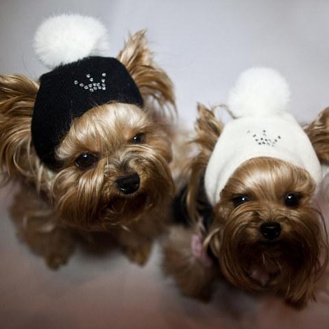1218 - Шапки для собак