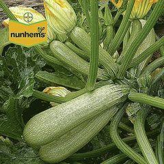 Сангрум F1 семена кабачка (Nunhems / Нюнемс)