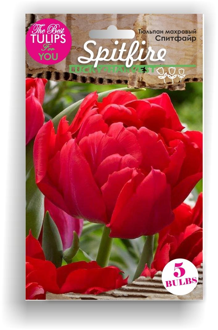 Тюльпан Махровый ранний Spitfire (Спитфайр) Украина 5 шт
