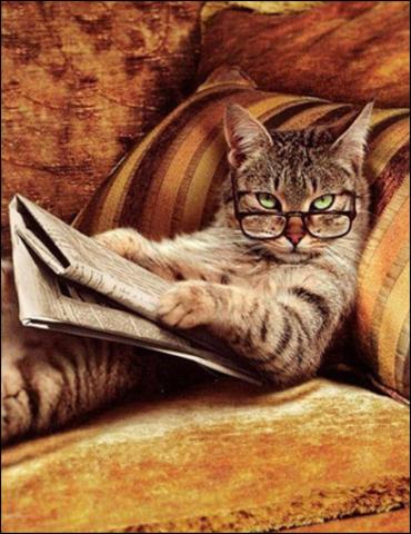 Алмазная Мозаика 40x50 Кот читает газету
