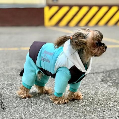 007-2 LM - Комплект костюм и куртка для собак