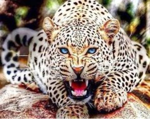 Алмазная Мозаика 30x40 Леопард скалиться (арт. TC73599)