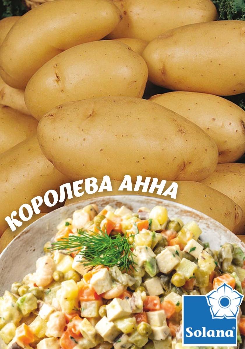 Насіннева картопля