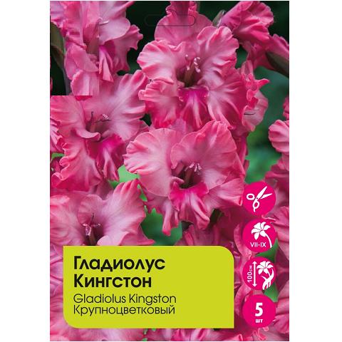 Гладиолус Кингстон крупноцветковый 5шт