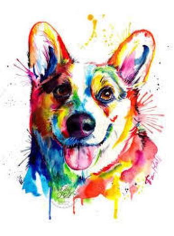 Картина раскраска по номерам 40x50 Цветной корги