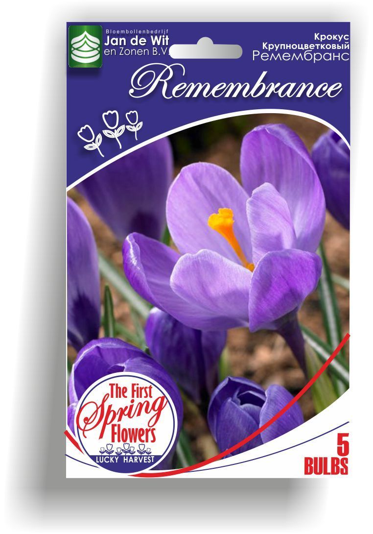 Луковицы Крокуса крупноцветкового Remembrance (Ремембранс) TM Jan de Wit en Zonen B.V. ( количество в упаковке 5 луковиц)