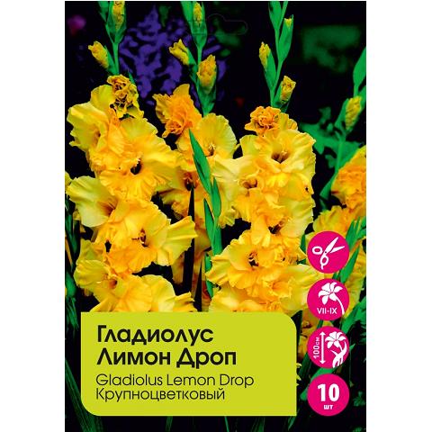 Гладиолус Лимон Дроп крупноцветковый 10шт