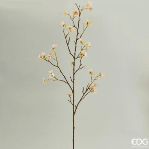 Гептакодиум нежно-персиковый