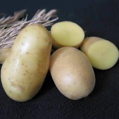 Картофель свежий «Невский» / 30 кг (мешок)