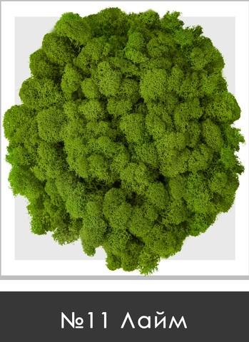 Стабилизированный мох (ягель) цвет №11 Лайм