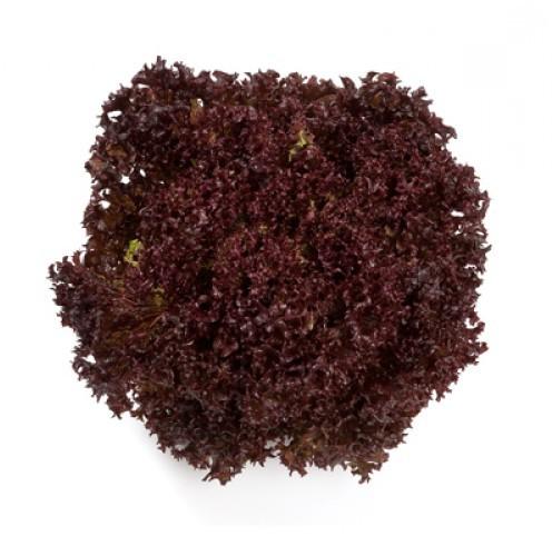 Nunhems Революция семена салата лолло росса (Nunhems / Нюнемс) Революция-min.jpg
